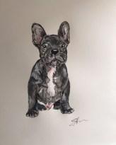 Elsa RT - French Bulldog