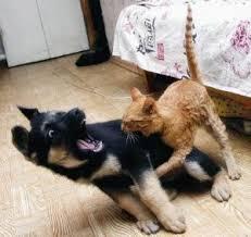Кошка и собака в одном доме.