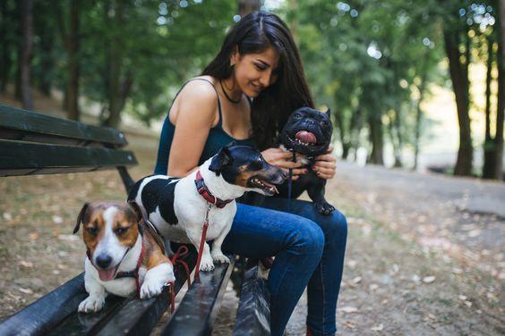 передержка собаки во время отпуска