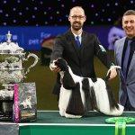 На Crufts Dog Show 2017 победителем стал американский кокер-спаниель