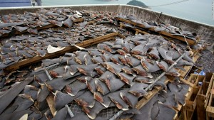 130104081845-hong-kong-roof-shark-fins-horizontal-large-gallery