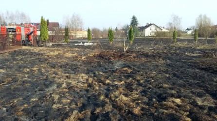 Interwencja pożar trawy regulska zd8
