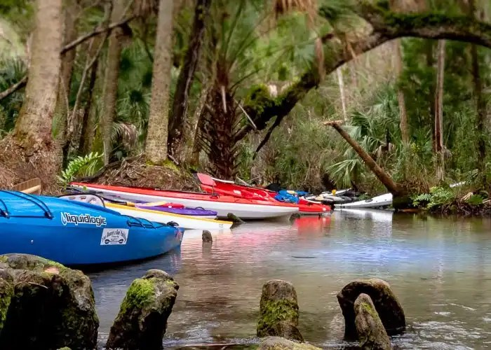 Kayaks along river bank with sweeping branched over river in background