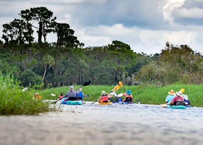 Kayakers on the Myakka River Paddling up through the marsh grass.