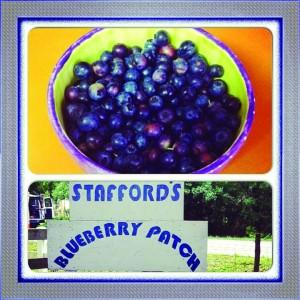 BlueberriesStafford
