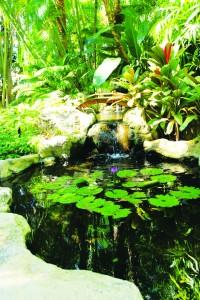 TOURS_Pond