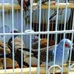 سارة العوضي: سوق الجمعة يتم فيه أسوأ معاملة للحيوانات