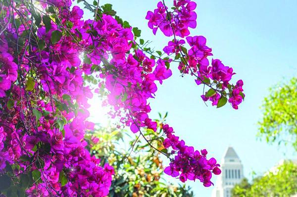 حديقتك المنزلية.. تلوّن «مودك» للأحلى والأروع