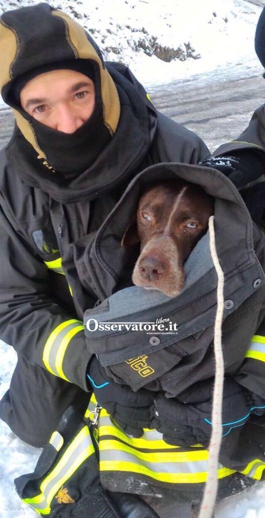 Un cane bracco salvato dal freddo dentro un giaccone dei Vigili del Fuoco a San Severino Marche