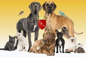 Approvato il nuovo Regolamento per il benessere degli animali