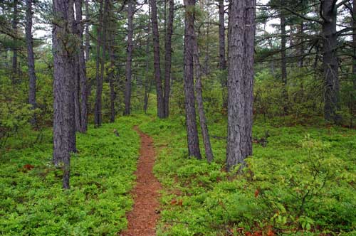 Hiking the Ossipee Pine Barrens and Foss Mountain