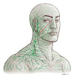 Lymphatics in the Head