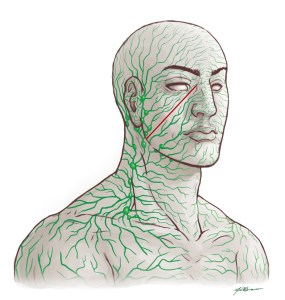 Lymphatics in the Head