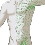 Lymphatic System Drawing