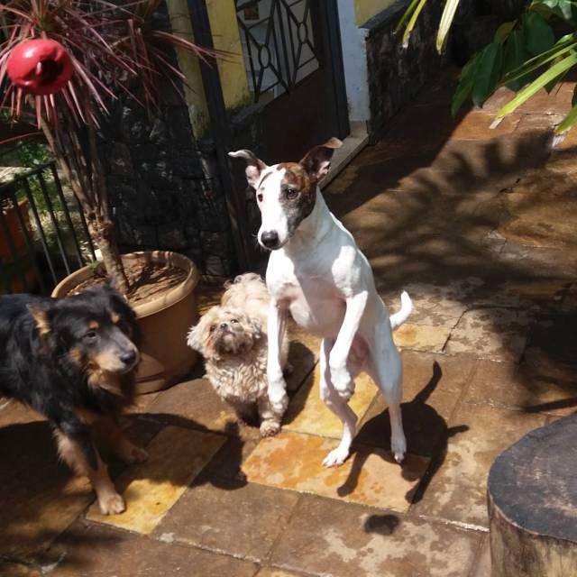 ossosdooficio ossosoficio crechedecaes hoteldecaes petday pethotel petdaycare daycare caes cachorrohellip