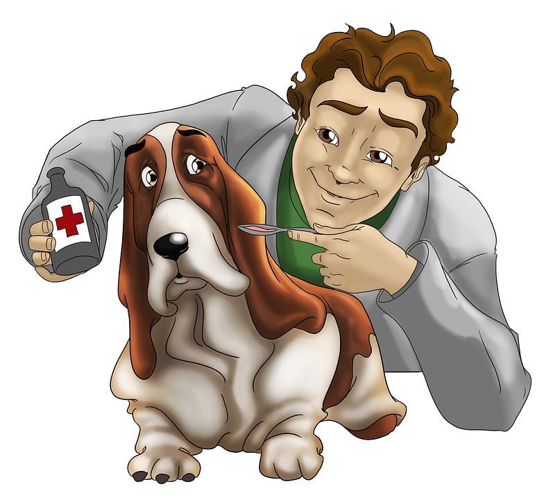 """Saúde de seu cão na """"Ossos do Ofício"""""""