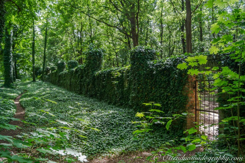 The overgrowing walls of the abandoned cemetery