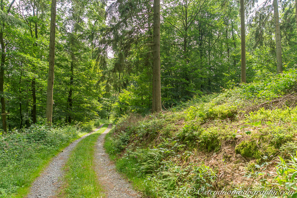 Walking Paths in The Ardennes