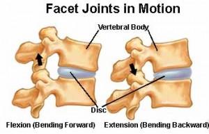 Facet joints control movement