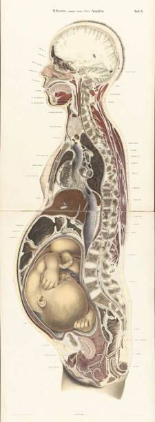 www.embryologisch.nl