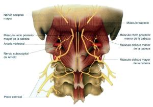 dolor de cabeza osteopatia