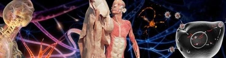 Foto menselijk lichaan, van de Osteopraktijk in Amsterdam, behandeling van bewegingsbeperkingen van botten, spieren, bloedvaten, ingewanden.