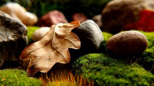 rocks & grass