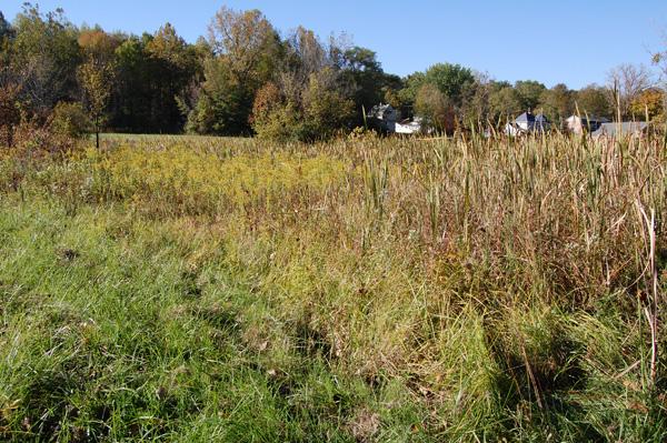 Field growth patterns