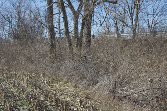 Trees and dense underbrush