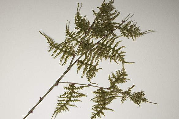 Artificial evergreen bough