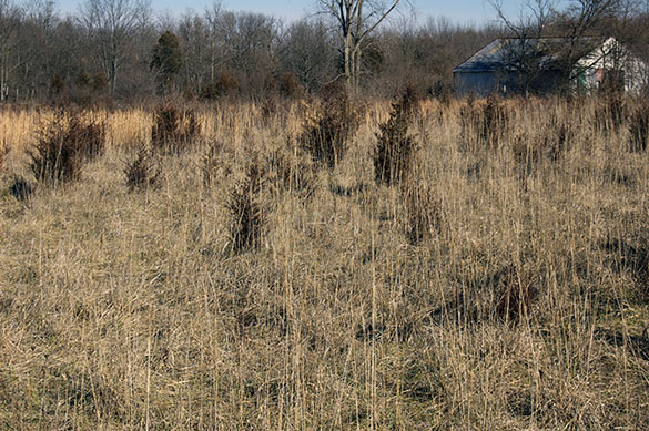 Wild grass meadow reverting to forest