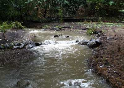 Stream after dam removal