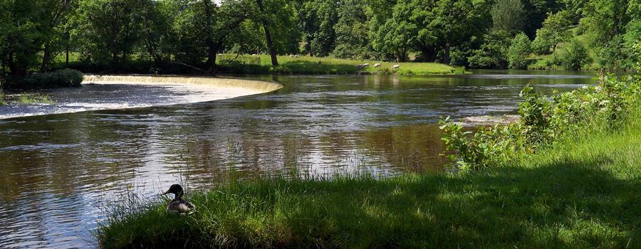 near Llangollen - Horseshoe Falls