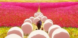 Videoclip do tema de Birthday Wonderland