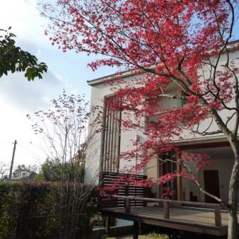 3:秋 秋の全景。イロハモミジの紅葉が冬の到来を告げる。