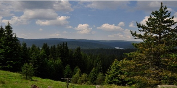 Резерват Мантарица – уникална гледка в Родопите
