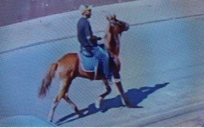 Homem furtou queijo na padaria e saiu a galope em um cavalo