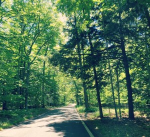 Road to Ludington Michigan - Tunnel of Trees
