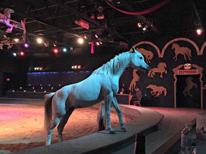 Dancing Horses Theatre Lake Geneva - Meeting Horses