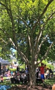 Family fun at Woodstock Farmer's Market with Storytime.