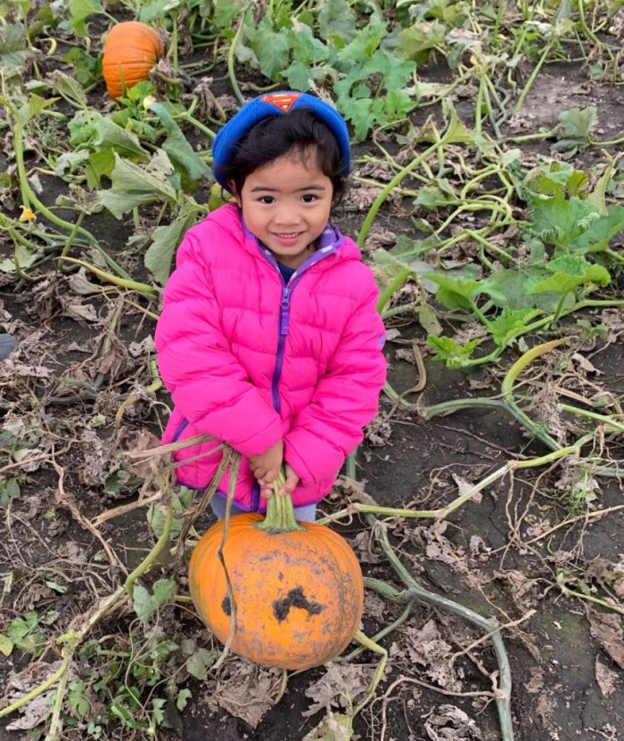 Fall family fun at Siegel's Cottonwood Farm in Lockport, Illinois.