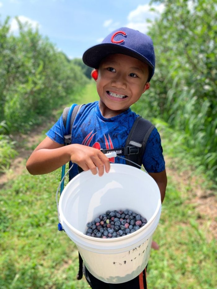 Our experience blueberry picking at Stateline Blueberries in Michigan City, Indiana. Start a new family tradition!