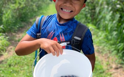Blueberry Picking at Stateline Blueberries: A Fun New Family Tradition