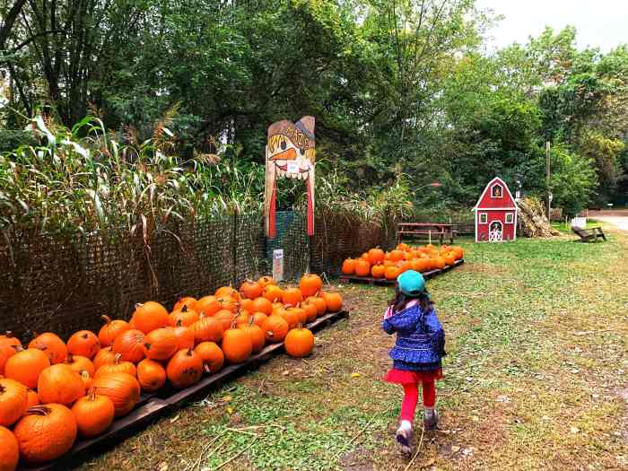 Visit Dave's Pumpkins in Huntley, a no-frills farm stand with a variety of pre-picked pumpkins and free activities for kids.