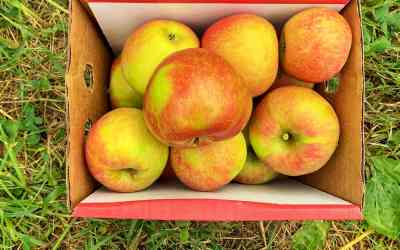 Garwood Orchards: Simple Apple Picking and U-Pick Farm Experience