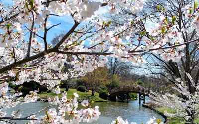 Stop and smell the flowers at Missouri Botanical Garden