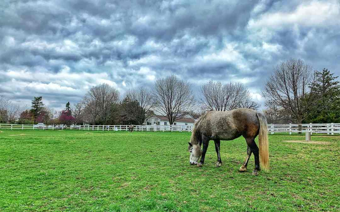 Hikes and Horses at Danada Forest Preserve