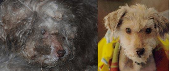 Διάσωση ζώων πριν και μετά (5)