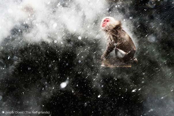 Wildlife Photographer of the Year 2013 (20)