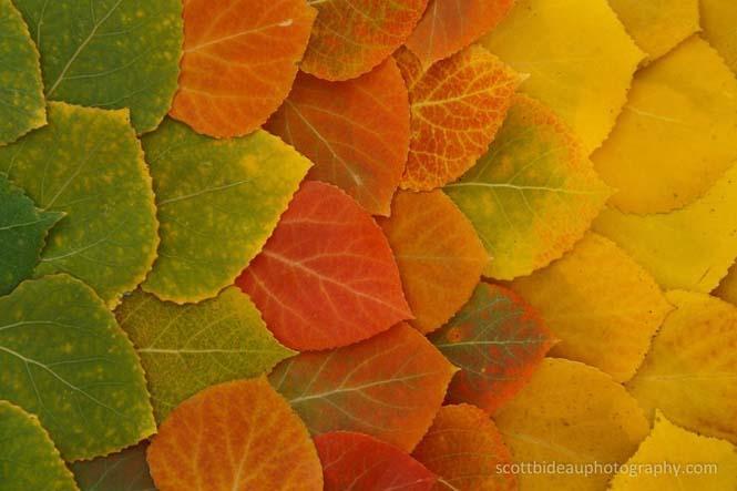 Όλο το χρωματικό φάσμα του Φθινοπώρου σε εντυπωσιακές φωτογραφίες (15)